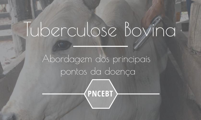 Tuberculose bovina – o que estudar para se dar bem em concursos