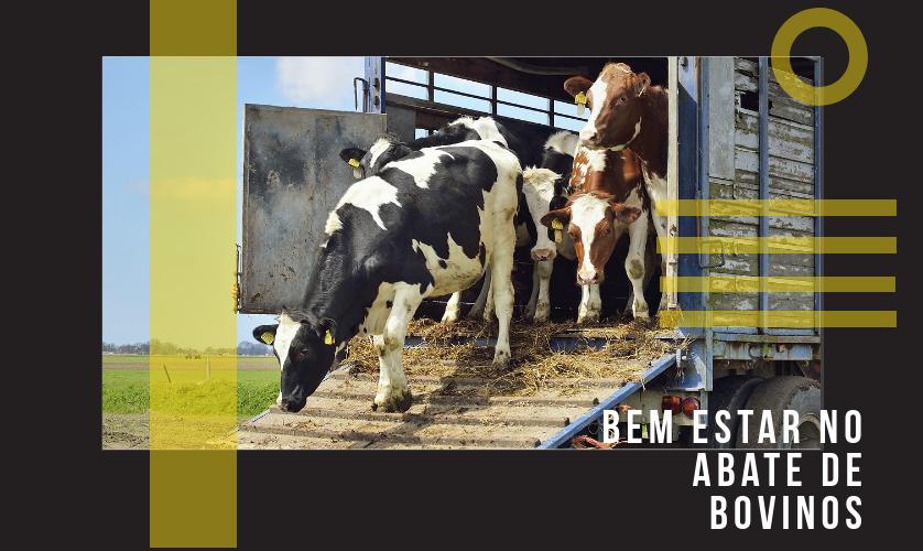 Bem estar no abate de bovinos: 3 dicas para garantir esse direito