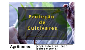 Proteção de Cultivares: tudo sobre a Lei