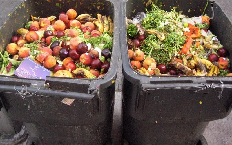 Perda e Desperdício dos Alimentos: aspectos agronômicos, políticos e ambientais