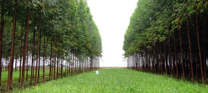 Sistema Integração Lavoura-Pecuária-Floresta (ILPF)