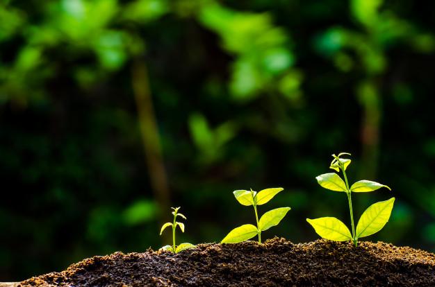 Análise de solo: o que é, importância, tipos de análise e como fazer