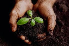 Perigos da pseudociência infiltrada na Agroecologia