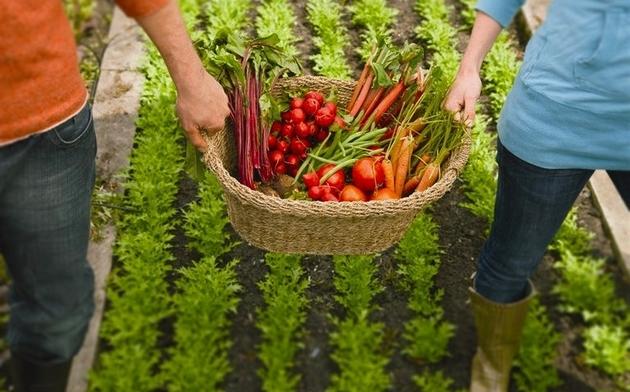 Agricultura Orgânica é Sinônimo de Sustentabilidade?
