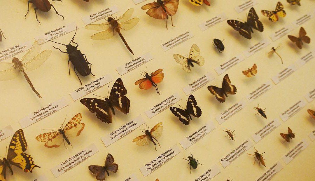 Entomologia: o que é e qual sua importância