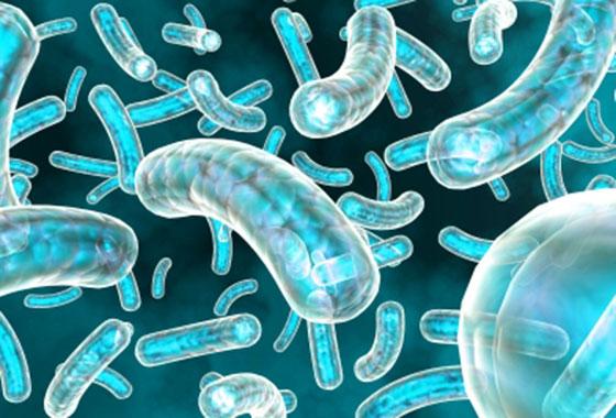 O Uso de Bactérias Láticas na Indústria de Alimentos