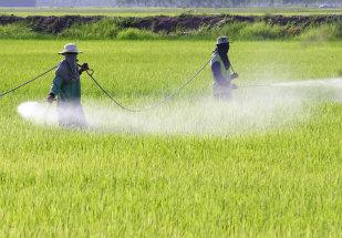 Agrotóxicos e afins: impacto na exportação de produtos agrícolas