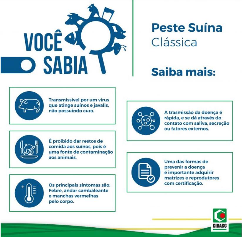 Peste Suína Clássica - transmissão, sintomas e prevenção