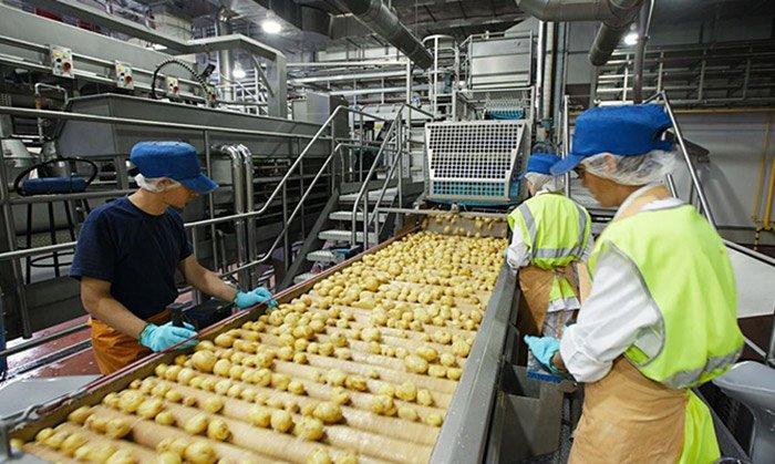 Indústria de alimentos no Brasil: o cenário atual e as tendências do setor