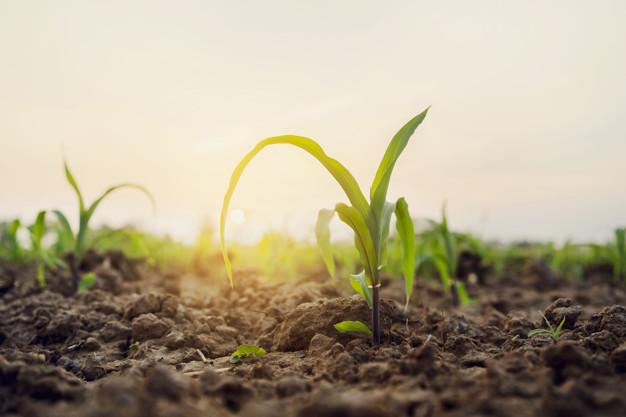 Macronutrientes para as plantas: o que são e qual sua importância