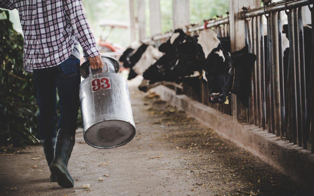 Mastite bovina: conceito e tipos existentes da doença