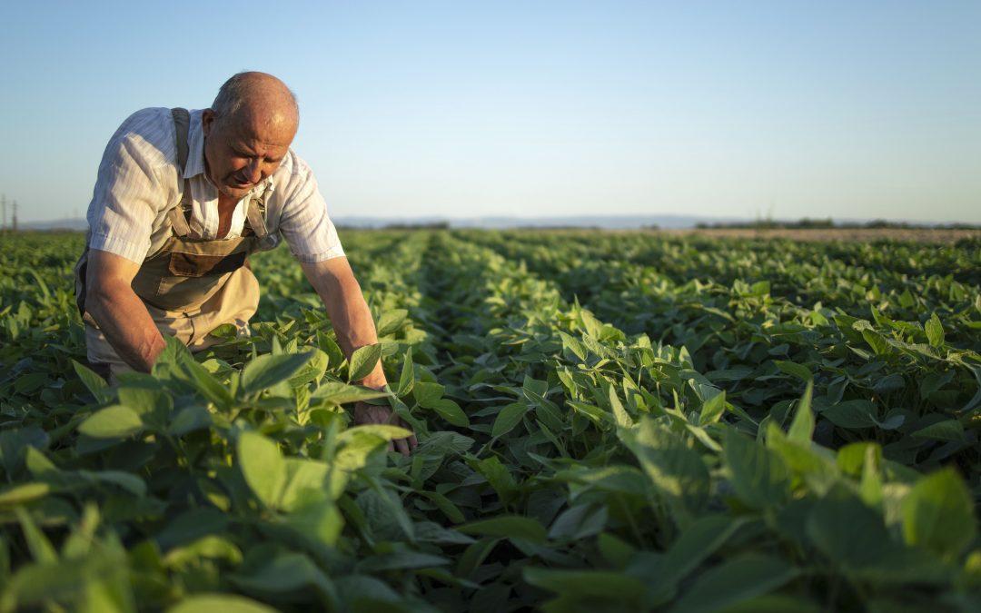 Herbicidas: o que são, como agem e seus impactos na agricultura